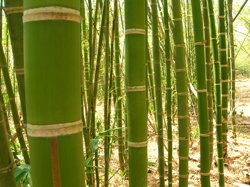 bambus dielen terrassen aus gras garten news f r heimwerker. Black Bedroom Furniture Sets. Home Design Ideas