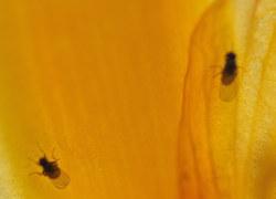 Unerw nscht fruchtfliegen und blattl use wohnen news for Fliegen hausmittel