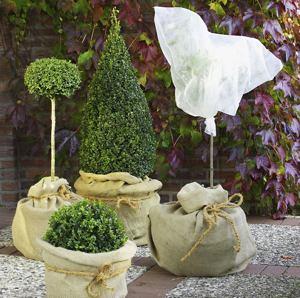 k belpflanzen vor frost sch tzen garten news f r heimwerker. Black Bedroom Furniture Sets. Home Design Ideas