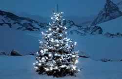 Lichterkette Weihnachtsbaum Außen.Kauftipps Für Lichterketten Know How News Für Heimwerker